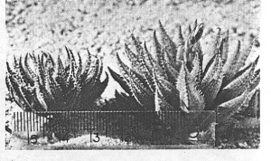 Fig. 6.