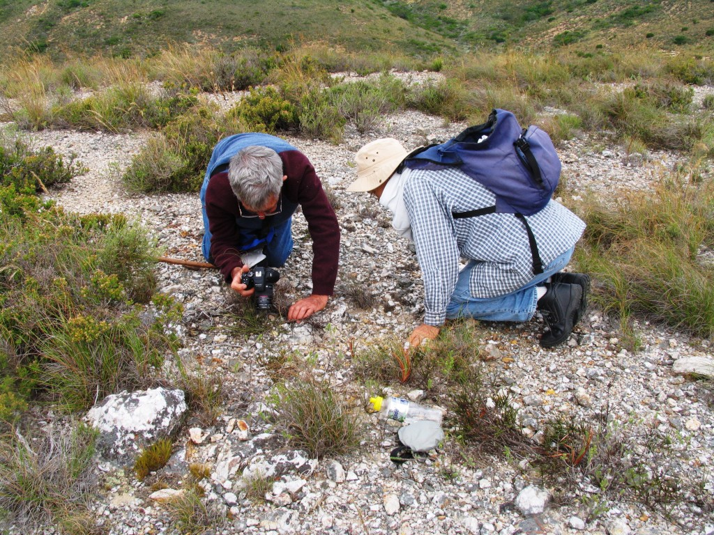 Fig. 30 7531 S Kleinberg slope.  Enthusiasts at play.