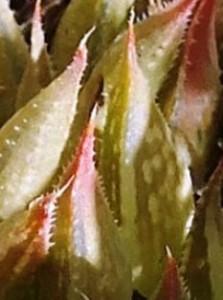 8020a - leaf back