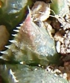 MBB7526.1- leaf back