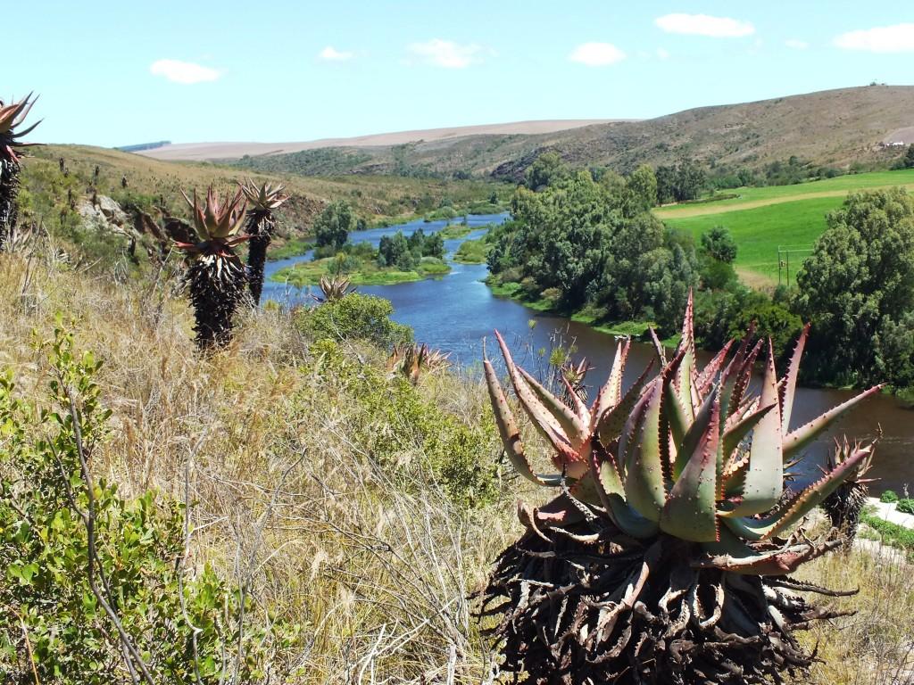 View downstream from 2420 habitat